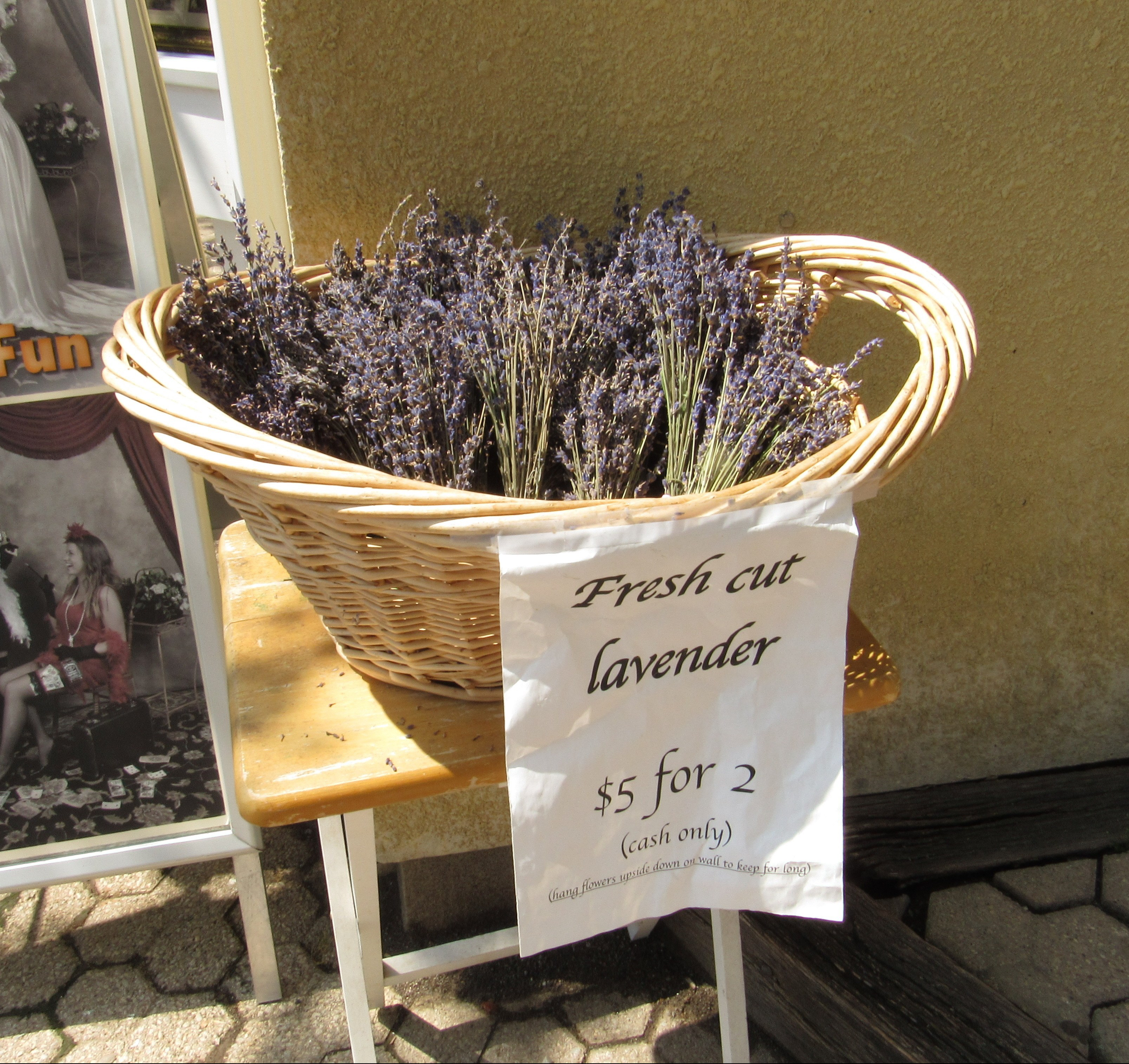 Fresh Cut Lavender